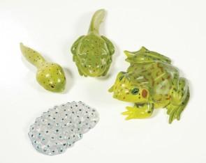 Lebenszyklus - Figuren Entwicklung des Frosches