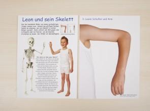 Leon's Knochen